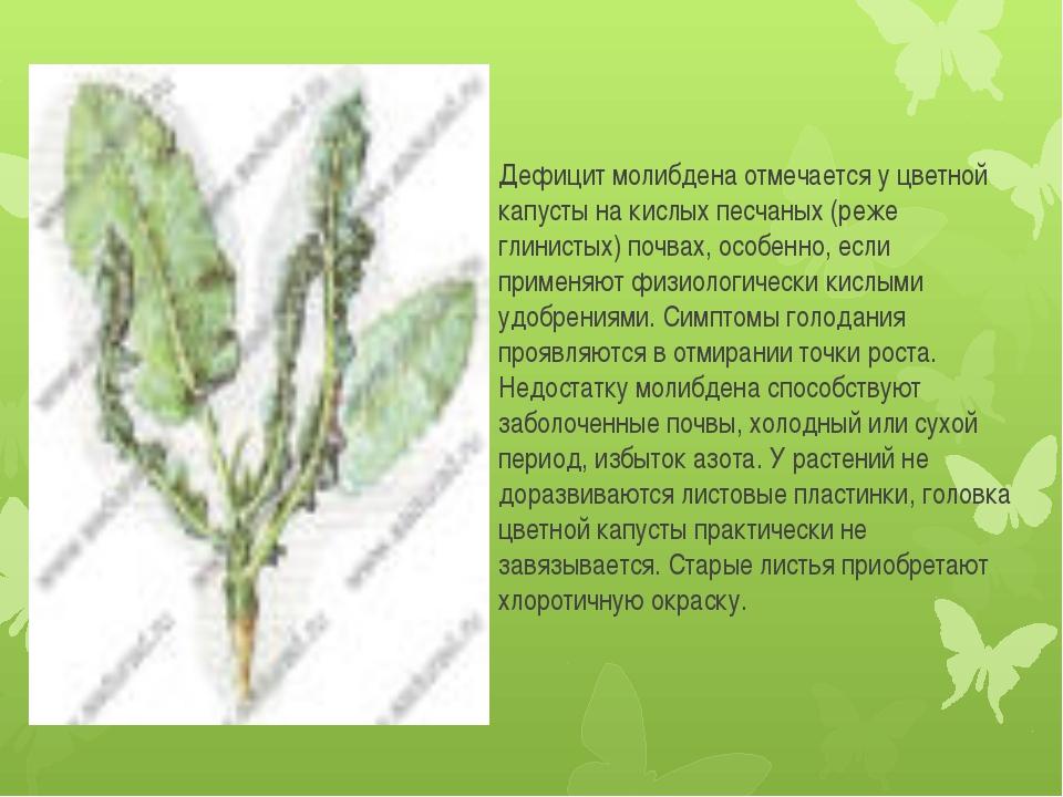 Дефицит молибдена отмечается у цветной капусты на кислых песчаных (реже глини...