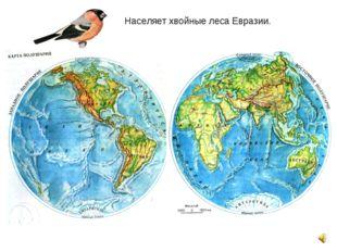 Населяет хвойные леса Евразии.