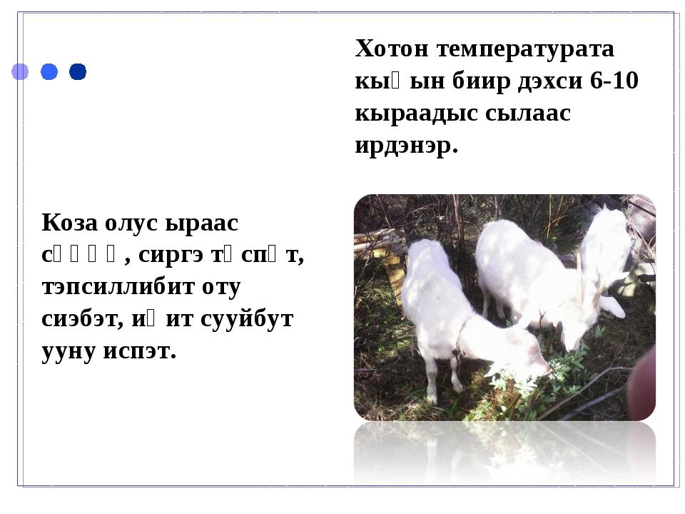 Коза олус ыраас сүөһү, сиргэ түспүт, тэпсиллибит оту сиэбэт, иһит сууйбут уун...