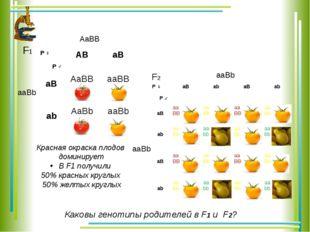 Красная окраска плодов доминирует В F1 получили 50% красных круглых 50% желты