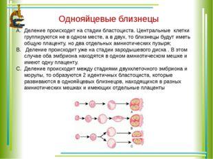 Однояйцевые близнецы Деление происходит на стадии бластоциста. Центральные кл