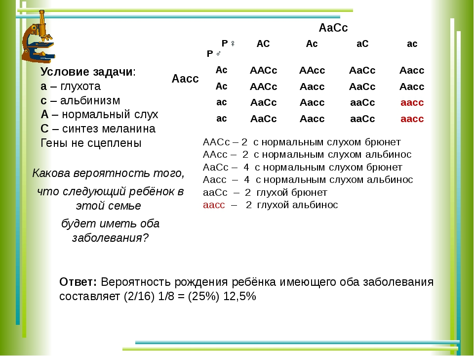 АаСс Аaсc Условие задачи: а – глухота с – альбинизм А – нормальный слух С – с...