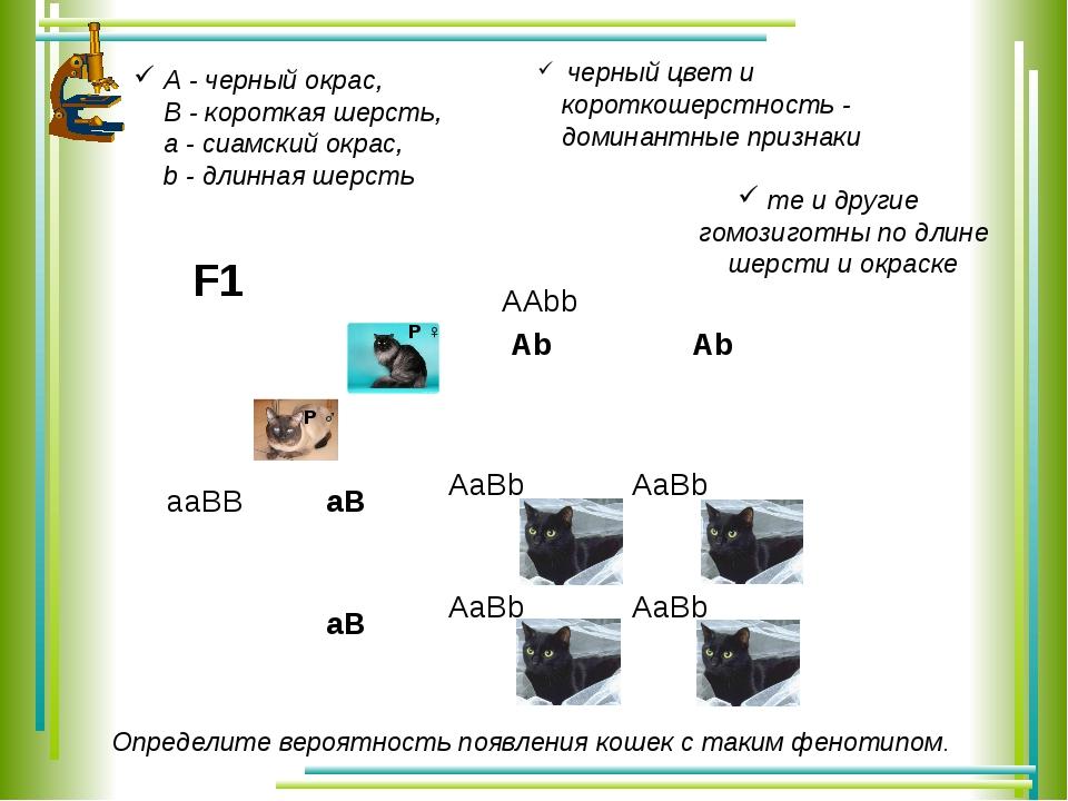 AAbb aaBB F1 А - черный окрас, В - короткая шерсть, а - сиамский окрас, b - д...