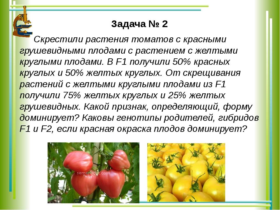 Задача № 2 Скрестили растения томатов с красными грушевидными плодами с раст...