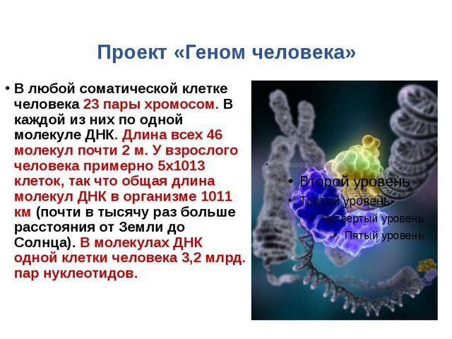 Проект «Геном человека» В любой соматической клетке человека 23 пары хромосо...