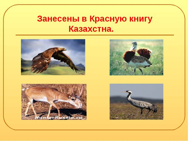 Занесены в Красную книгу Казахстна.