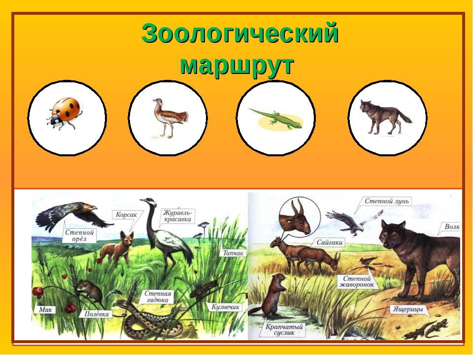 Зоологический маршрут
