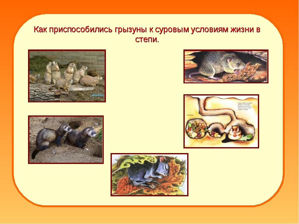Как приспособились грызуны к суровым условиям жизни в степи.