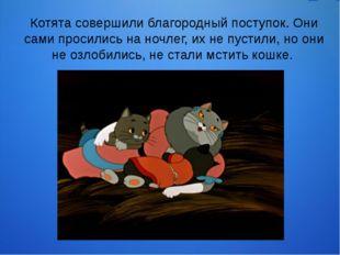 Котята совершили благородный поступок. Они сами просились на ночлег, их не пу