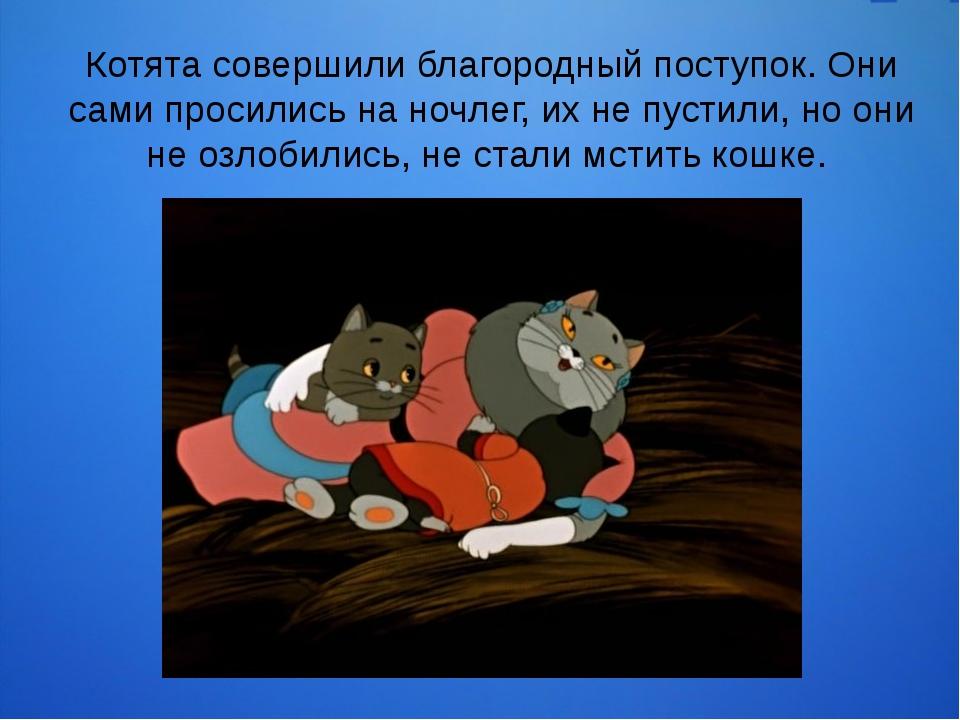 Котята совершили благородный поступок. Они сами просились на ночлег, их не пу...
