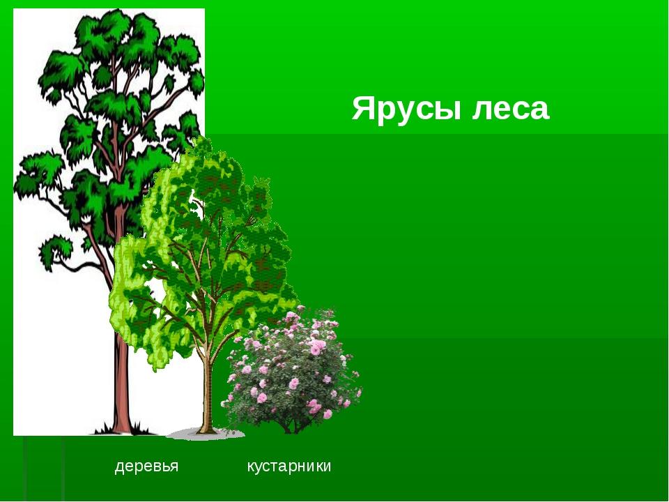 Презентация на тему растительные сообщества и