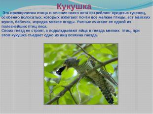 Кукушка Эта прожорливая птица в течение всего лета истребляет вредных гусениц