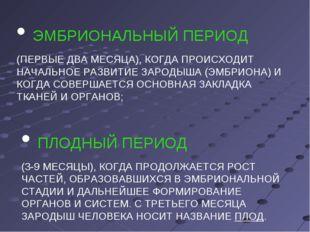 ЭМБРИОНАЛЬНЫЙ ПЕРИОД (ПЕРВЫЕ ДВА МЕСЯЦА), КОГДА ПРОИСХОДИТ НАЧАЛЬНОЕ РАЗВИТИ