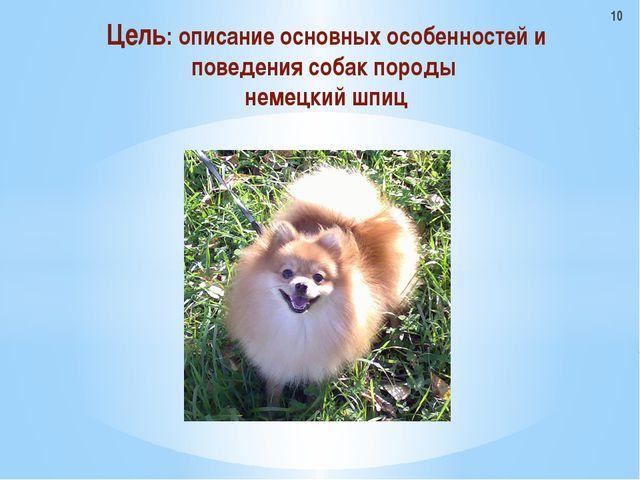 Цель: описание основных особенностей и поведения собак породы немецкий шпиц 10