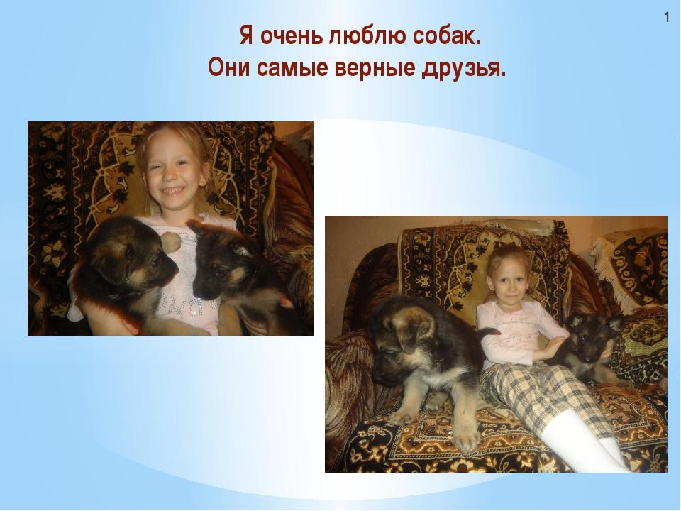 Я очень люблю собак. Они самые верные друзья. 1