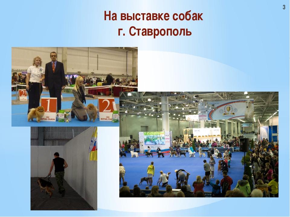 На выставке собак г. Ставрополь 3