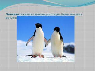 Пингвиныотносятся к нелетающим птицам. Белая манишка и черный фрак делают и