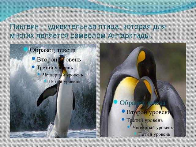 Пингвин – удивительная птица, которая для многих является символом Антарктиды.