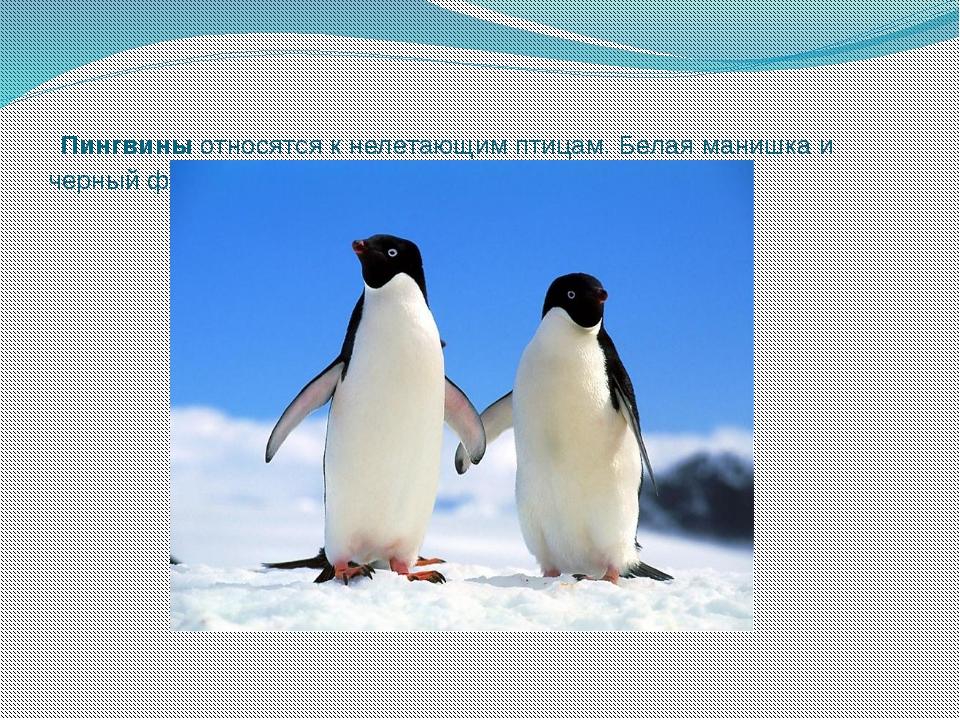Пингвиныотносятся к нелетающим птицам. Белая манишка и черный фрак делают и...