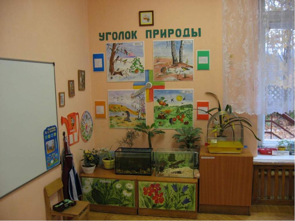 Оформление уголок природы в детском саду своими руками