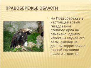На Правобережье в настоящее время гнездование степного орла не отмечено, одна