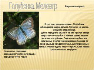 Polymmatus daphnis В год дает одно поколение. Лёт бабочек наблюдается в июне-