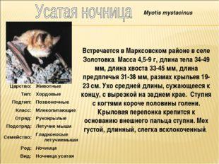 Встречается в Марксовском районе в селе Золотовка. Масса 4,5-9 г, длина тела