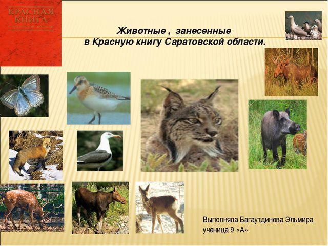 Животные , занесенные в Красную книгу Саратовской области. Выполняла Багаутди...