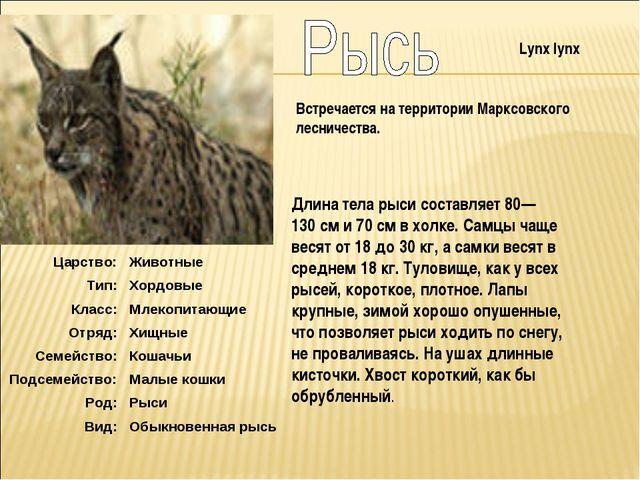 Длина тела рыси составляет 80—130см и 70см в холке. Самцы чаще весят от 18...