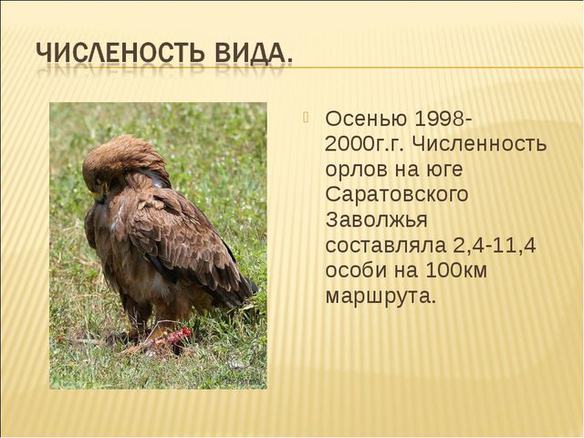 Осенью 1998-2000г.г. Численность орлов на юге Саратовского Заволжья составлял...