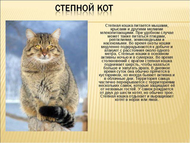 Степная кошка питается мышами, крысами и другими мелкими млекопитающими. При...