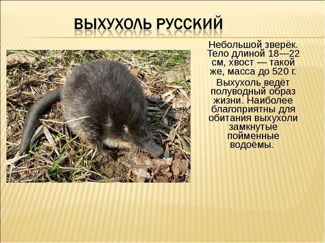 Небольшой зверёк. Тело длиной 18—22 см, хвост — такой же, масса до 520 г. Вых...