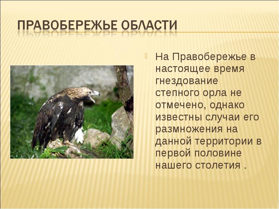 На Правобережье в настоящее время гнездование степного орла не отмечено, одна...