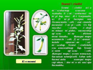 Темекі өсімдігі Темекі өсімдігі алқа тұқымдастар класына жатады. Бұл тұқымда