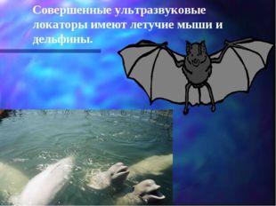 Совершенные ультразвуковые локаторы имеют летучие мыши и дельфины.