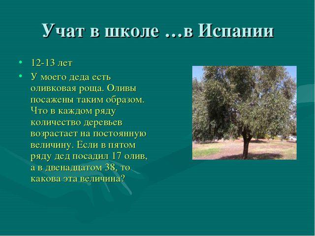 Учат в школе …в Испании 12-13 лет У моего деда есть оливковая роща. Оливы пос...