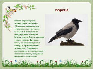 ворона Имеет характерную черносерую «одежку». Обладают прекрасным обонянием и