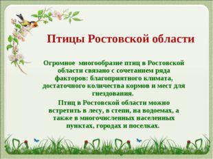 Птицы Ростовской области Огромное многообразие птиц в Ростовской области свя