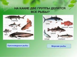 НА КАКИЕ ДВЕ ГРУППЫ ДЕЛЯТСЯ ВСЕ РЫБЫ? Морские рыбы Пресноводные рыбы