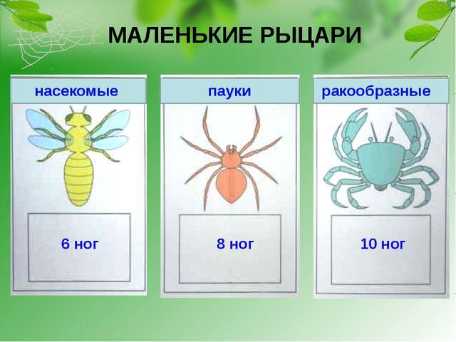 МАЛЕНЬКИЕ РЫЦАРИ насекомые пауки ракообразные 6 ног 8 ног 10 ног