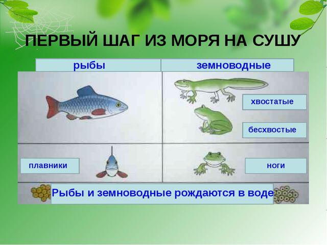 ПЕРВЫЙ ШАГ ИЗ МОРЯ НА СУШУ рыбы земноводные Рыбы и земноводные рождаются в во...