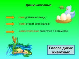 Дикие животные сами добывают пищу; сами строят себе жилье; самостоятельно заб
