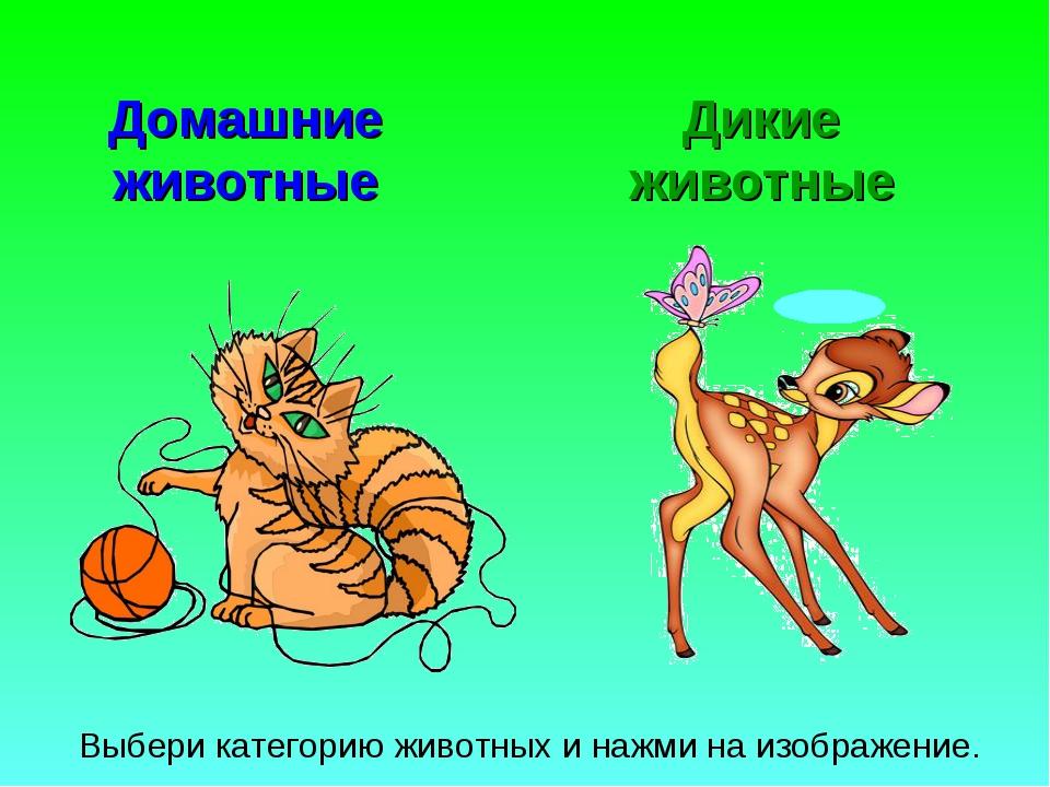 Домашние животные Дикие животные Выбери категорию животных и нажми на изображ...