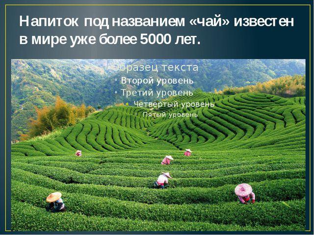 Напиток под названием «чай» известен в мире уже более 5000 лет.