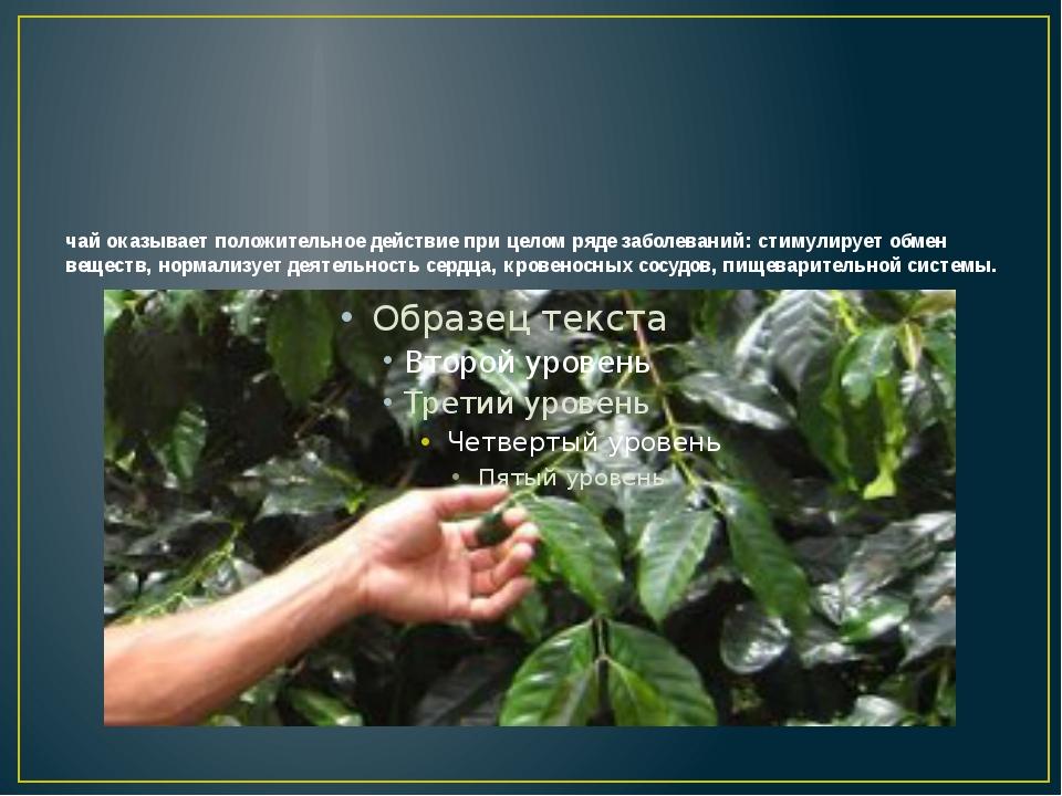 чай оказывает положительное действие при целом ряде заболеваний: стимулирует...