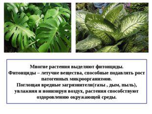 Многие растения выделяют фитонциды. Фитонциды – летучие вещества, способные п