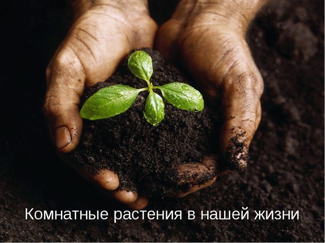 Комнатные растения в нашей жизни Чтобы вставить этот слайд в презентацию, вып...