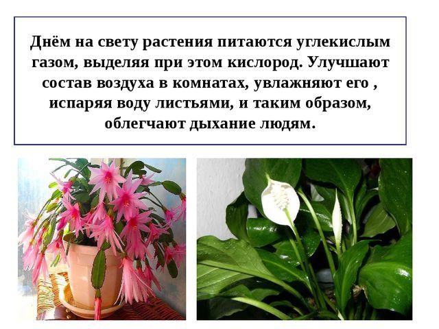 Днём на свету растения питаются углекислым газом, выделяя при этом кислород....
