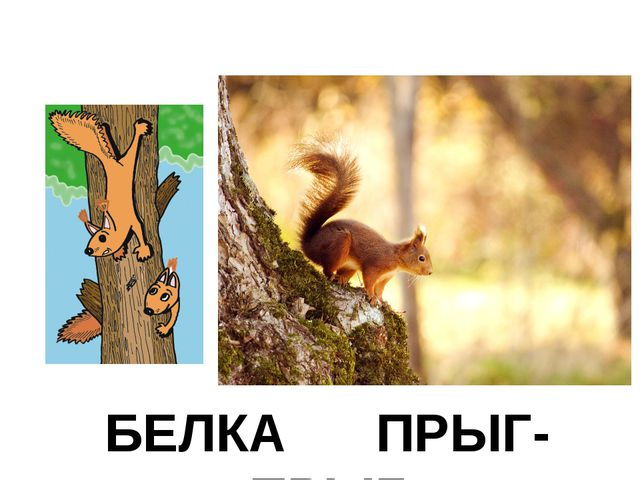 БЕЛКА ПРЫГ-ПРЫГ