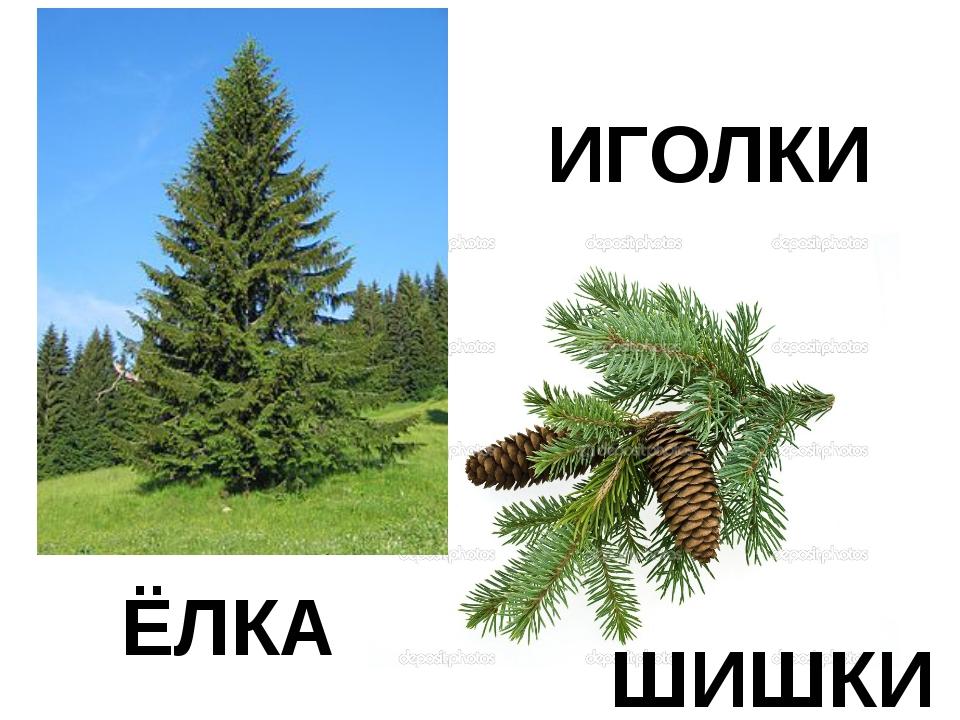 ЁЛКА ИГОЛКИ ШИШКИ